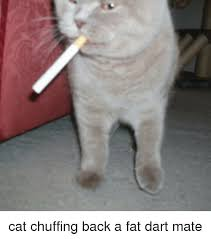 Fat Cat Meme - cat chuffing back a fat dart mate cats meme on me me
