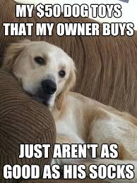 Dog Owner Meme - my 50 dog toys that my owner buys just aren t as good as his
