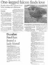 the canadian peregrine foundation sightings across canada