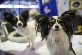 dog euthanasia company recalls several brands of dog food due to presence of