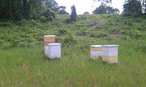 honey bees backyard livestock
