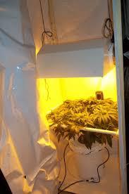 400 Watt Hps Grow Light 400w Hps 2x2 Scrog Grow Grasscity Forums