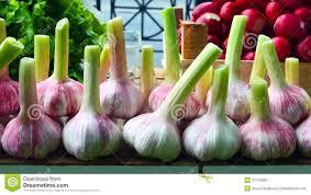 garlic bulbs for sale stock photo image 41730682