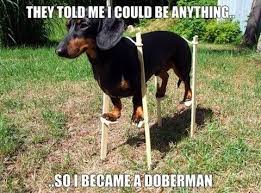 Dachshund Meme - dachshund memes and wiener dog humor the smoothe store