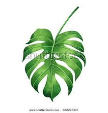 watercolor painting palm leaf green leave stock illustration