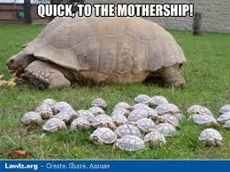 Tortoise Meme - lawlz laugh out loud on this humor site with funny pictures and