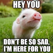 Sad Girlfriend Meme - piggy imgflip