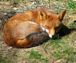 gafunkyfarmhouse this n that thursdays animal themed gafunkyfarmhouse this n that thursdays anthropologie fox inspired