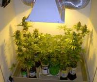 250 watt hps grow light marijuana grow lights