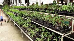 where to buy potted herbs casa veneracion