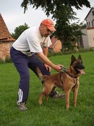belgian sheepdog gif de alphaville bohemia