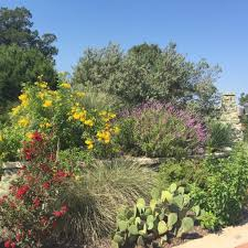 austin texas native plants latest tips u0026 updates from grass works lawn care austin tx