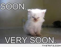 Soon Cat Meme - soon cats cats and more cats pinterest
