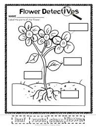 76 best preschool life cycles labeling parts images on pinterest
