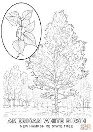 new hampshire state tree coloring page free printable coloring pages