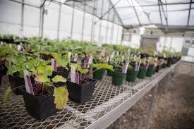 native plant symposium and plant uga to dedicate mimsie lanier center for native plant studies