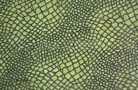 a green snake wallpapers green snake skin stock photo claudio gedda cla78 1453191