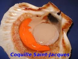 cuisiner les st jacques dictionnaire de cuisine et gastronomie coquille jacques