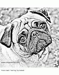 pug dog coloring pages coloring