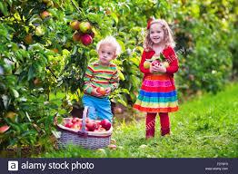 picking apples friends stock photos u0026 picking apples friends stock