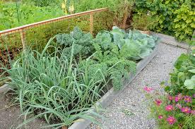 fall vegetable garden gardening ideas