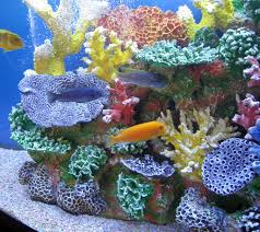 halloween reef transparent background amazon com instant reef dm035 artificial coral reef aquarium