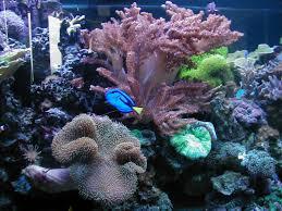 172 gallon oceanic bow front aquarium the fish bowl u0026 more