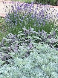 Sensory Garden Ideas Plants For Sensory Garden Best Sensory Garden Ideas On Garden
