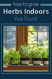 Window Sill Herb Garden by Best 25 Growing Herbs Indoors Ideas On Pinterest Growing Plants