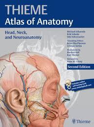 Human Anatomy Atlas Head Neck And Neuroanatomy Thieme Atlas Of Anatomy Thieme