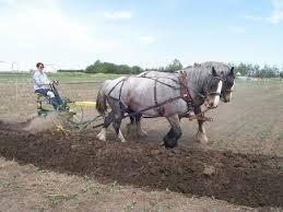 wanham plowing match ready for rain or shine my grande prairie now