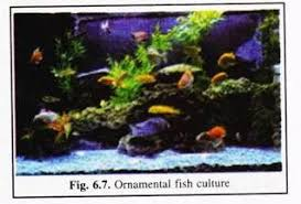 aquaculture characters types and qualities