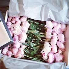 Peonies Delivery 2340 Best Botanique Images On Pinterest Flower Pretty Flowers