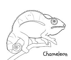 wild chameleon coloring pages wild chameleon coloring