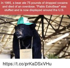 Coke Bear Meme - 25 best memes about cocaine cocaine memes