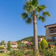 aegean melathron luxury hotel in halkidiki 5 star hotel kassandra