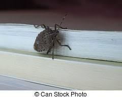 was ist das für ein insekt eine wanze oder was urlaub insekten insekt wanze tier insekt satz wanze sammlung tier