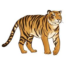 pencil sketches and drawings how to draw a tiger
