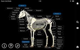 Dog Anatomy Organs Google 3d Anatomy Image Collections Learn Human Anatomy Image