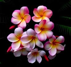 flowers images 50 beautiful examples of flower photography noupe