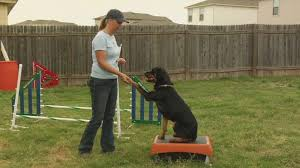 boxer dog training tips boxer dog training youtube train your dog with love check out the