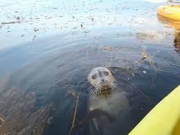 California snorkeling images Snorkel gear rental la jolla california jpg