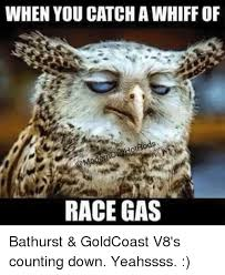 Bathurst Memes - when you catchawhiff of race gas bathurst goldcoast v8 s counting