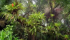 Tropical Rainforest Plant List - el yunque rain forest in puerto rico animals plants puerto rican