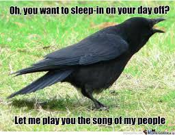 Crow Meme - damn crow by jimozoid meme center