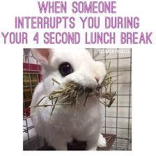 Nurses Day Meme - 971 best nursing is my life images on pinterest nurse humor