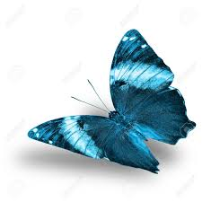 beautiful flying light blue butterfly with shadow on