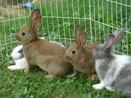 pet rabbits images reverse search