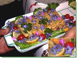 bourrache cuisine cuisine de flore cuisine aux fleurs recettes délices jardin flore