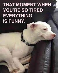 Tired Meme - tired dog meme 28 images 23 funny animal pictures of the day
